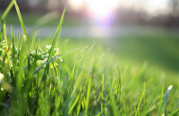 Mulčovacia kosačka: Efektívne riešenie pre záhradkárov